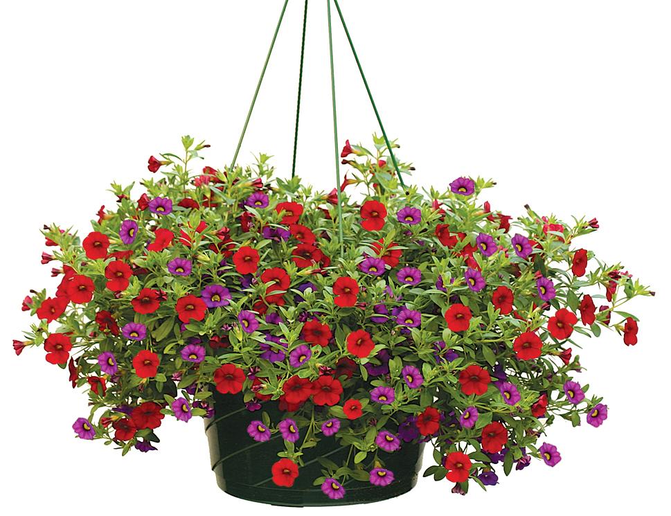 hanging basket giveaways for mothers day wjtl fm 90 3. Black Bedroom Furniture Sets. Home Design Ideas
